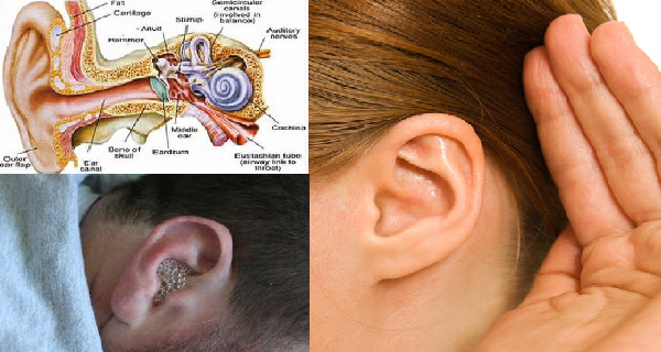 How To Cure An Ear Infection In Adults Naturally
